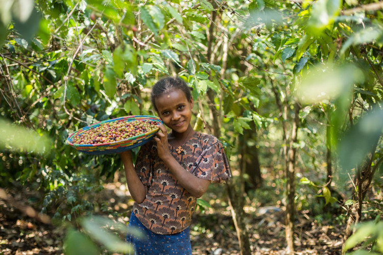 A smiling girl in a leafy asetting holds a plate of coffee beans